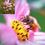 Kase Smartphone Lens Fashion Macro Pink_